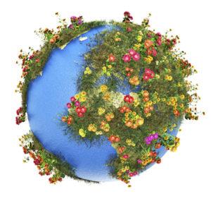 bloemen Blavier - bloemen aan huis - wij leveren wereldwijd bloemen !