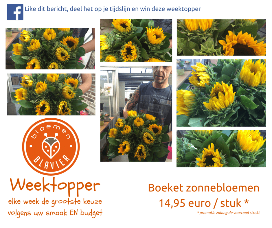 bloemenBlavier - Gingelom - Weektopper - Week29