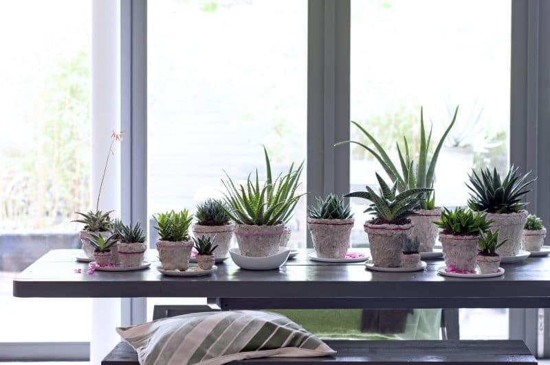 Slaap beter met deze 5 kamerplanten in je slaapkamer
