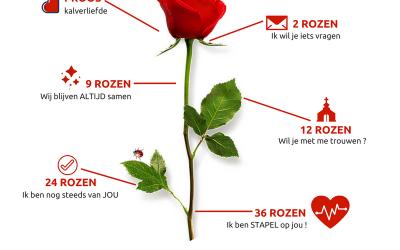 En hoeveel rozen krijg/geef jij dit jaar bij Valentijn?