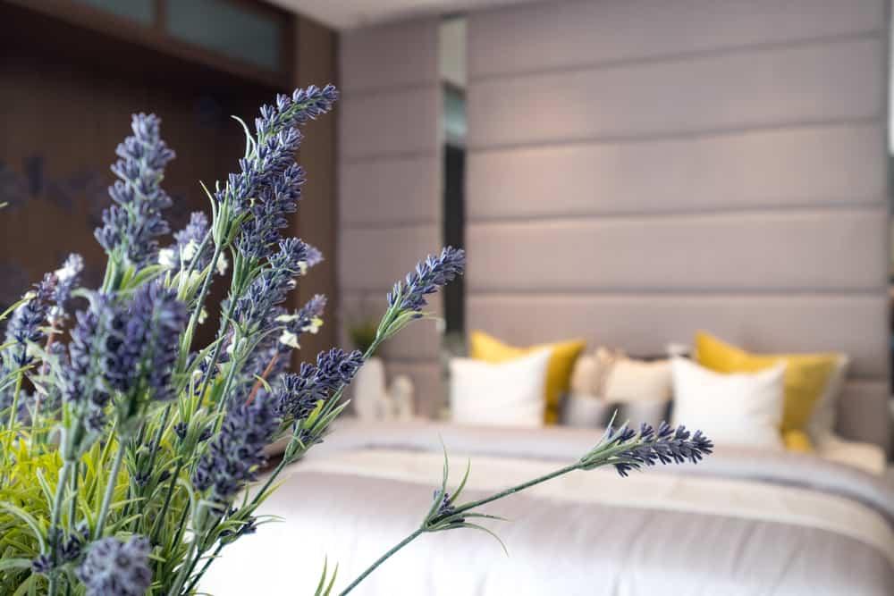 de plant is wel een echte buitenplant dus we adviseren niet om deze in een pot in de slaapkamer te zetten geniet ervan op je zonnige balkon of terras en
